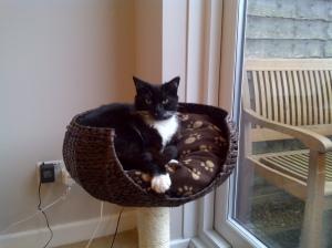 Chloe Hellcat